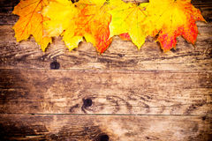 秋天背景,五颜六色的树叶子 免版税库存图片