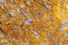 秋天背景,叶子树 库存照片