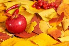 秋天背景,在黄色下落的叶子的红色苹果,在乡村模式的抽象装饰 免版税库存照片