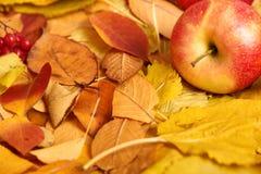 秋天背景,在黄色下落的叶子的红色苹果,在乡村模式的抽象装饰 库存图片