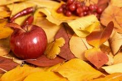 秋天背景,在黄色下落的叶子的红色苹果,在被定调子的乡村模式,黑褐色的抽象装饰 免版税库存图片