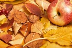秋天背景,在黄色下落的叶子的红色苹果,在被定调子的乡村模式,黑褐色的抽象装饰 库存照片
