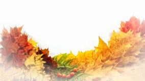 秋天背景,槭树叶子的元素 免版税库存照片