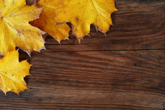 秋天背景,槭树在一个木板离开 免版税库存照片