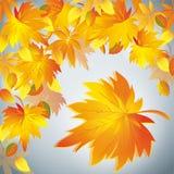 秋天背景,黄色叶子-为文本安置 库存照片
