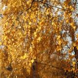 秋天背景,黄色叶子树 库存照片