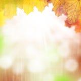 秋天背景离开槭树 库存图片