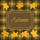 秋天背景离开槭树 免版税库存图片