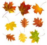 秋天背景离开白色 库存照片