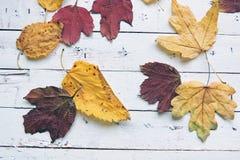 秋天背景离开白色 免版税库存照片
