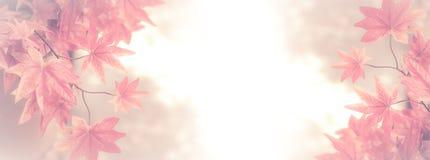 秋天背景离开透镜做的槭树照片特殊 背景的红槭叶子 免版税库存图片