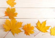 秋天背景离开黄色 9个秋天颜色 库存图片