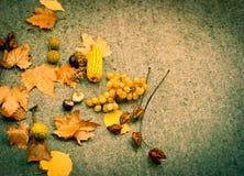 秋天背景-秋天概念 库存照片