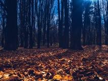 秋天背景黑色克里米亚纵向海运 库存照片
