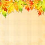 秋天背景 图库摄影