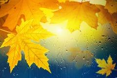 秋天背景 库存照片