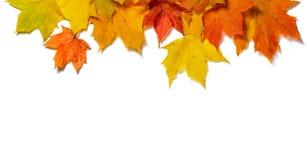 秋天背景colldet6119收集com保险开关http离开更多我的对象的dreamstime查出的href取悦事宜访问白色万维网 免版税库存照片