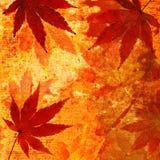 秋天背景grunge鸡爪枫 免版税图库摄影