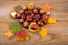 秋天背景whith栗子和枫叶 免版税库存图片
