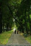 秋天胡同在公园 库存图片