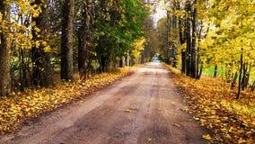 秋天胡同在有色的叶子的俄罗斯 股票录像