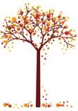 秋天脏的结构树 免版税库存照片