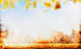 秋天自然与草坪、天空和五颜六色的树叶子的庭院或公园背景,室外 免版税库存图片