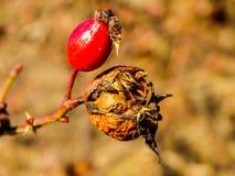 秋天自然在俄罗斯 免版税库存照片