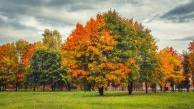 秋天自然在公园 在秋天的五颜六色的树 库存照片