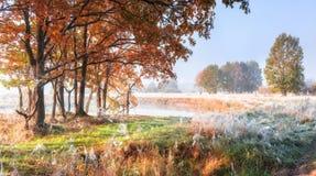 秋天自然场面 库存照片