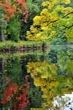 秋天自然秀丽  库存图片