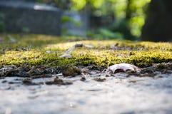 秋天自然背景 库存照片