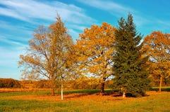 秋天自然风景染黄了在秋天领域的树在秋天晴朗的天气 库存图片