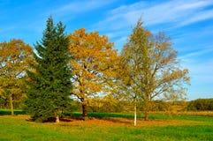 秋天自然风景染黄了在秋天晴朗的天气的秋天领域 图库摄影