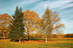 秋天自然风景染黄了在秋天晴朗的天气-被应用的葡萄酒过滤器的秋天领域 免版税库存照片