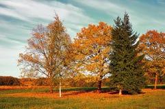 秋天自然风景染黄了在秋天晴朗的天气-被申请的葡萄酒口气的秋天领域 免版税库存图片