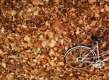 秋天自行车浪漫史 库存图片