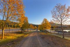 秋天色的树排行了土路 免版税库存图片