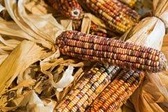 秋天色的玉米 库存图片