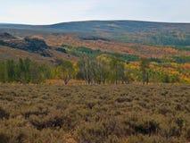 秋天色的白杨木结构树在沙漠 免版税库存照片