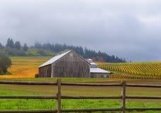 秋天色的葡萄园之前包围的谷仓 免版税库存图片