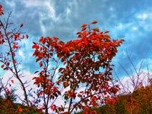 秋天节日,秋天颜色 免版税库存照片