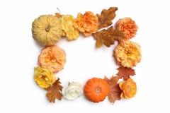 秋天花卉框架由五颜六色的槭树、橡木叶子、南瓜和被隔绝的退色玫瑰做成在白色背景 秋天和 免版税库存图片