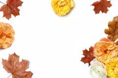 秋天花卉框架被隔绝的由五颜六色的槭树和橡木叶子和退色的杏子和黄色玫瑰做成在白色 免版税库存照片