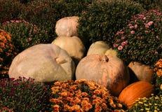秋天花和南瓜,微型橙色的菊花 大南瓜特写镜头背景 免版税图库摄影