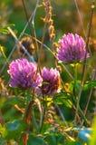 秋天花和叶子在领域 免版税库存图片