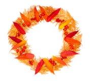 秋天花圈由红色叶子,金钟柏的枝杈,莓果荚莲属的植物,野玫瑰果,在一张白色背景顶视图的空泡制成 免版税库存照片