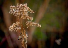 秋天花在公园 免版税库存照片