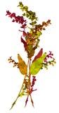 秋天花束上色叶子 库存照片