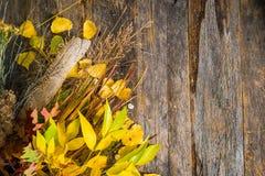 秋天花束背景 库存图片